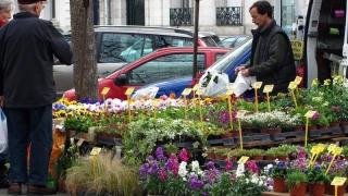 """Antifrauda """"ofilește"""" evaziunea cu flori"""