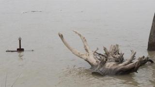 Vin apele! Dunărea, umflată!