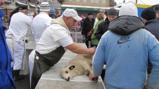 Vine Paștele! Vezi măsurile luate de veterinari!