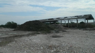 Zeci de mii de tone de alge strânse de pe plajele românești