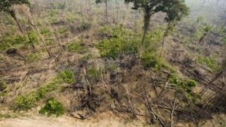 Defrişarea pădurii amazoniene, la cel mai înalt nivel din ultimul deceniu