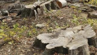 Defrișările masive pot aduce moartea! Știi cât s-a plantat in România?!