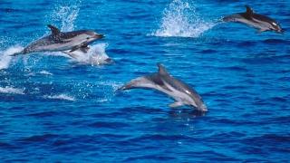 Înotul alături de delfini va fi interzis în Hawaii