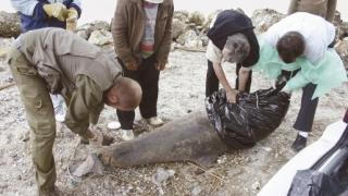 Un ONG atrage atenţia că patru delfini au eşuat din cauza plaselor pescăreşti