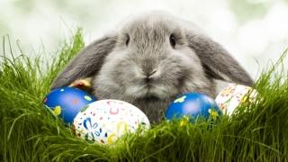 """""""Delicii și tradiții de Paște"""", acţiune caritabilă la Constanţa"""