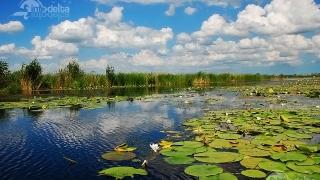 Exploraţi virtual o parte din Delta Dunării pe Google Maps