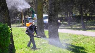 Acțiuni intensificate de dezinsecție în toate cartierele din Constanța