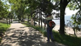 Unde au loc dezinsecții în Constanța