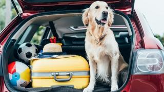 6 din 10 români vor merge vara aceasta în vacanță cu mașina personală