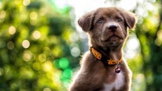 Aplicaţia care-ţi scoatele câinele la plimbare