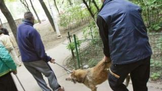 Acțiune de capturare a câinilor comunitari la Cumpăna