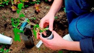 Eco-atitudini de Ziua Mondială a Mediului la Liceul Agricol Poarta Albă