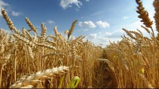 Egiptul aprobă importul de grâu din România