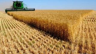 Egiptul a cumpărat 175.000 de tone de grâu din România și Ucraina