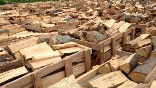 Trei suspecți reținuți în dosarul de evaziune fiscală în domeniul exploatării lemnului
