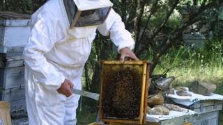Ajutor de minimis pentru apicultori: 15 lei pe familia de albine