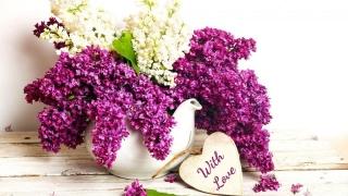 Florile de liliac au efect terapeutic! Vezi cât de bune sunt la...