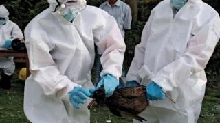 Gripă aviară depistată la două păsări găsite moarte într-un parc