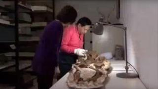Fosilă veche de 4.800 de ani a unei femei cu un copil în brațe, în Taiwan