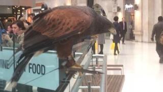 """""""De-a uliul si porumbeii"""", într-o gară londoneză"""