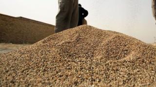 Egiptul a cumpărat 120.000 de tone de grâu din România