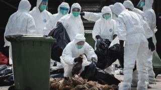Nivel maxim de alertă în Coreea de Sud, pe fondul izbucnirii gripei aviare