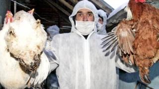 Alertă ANSVSA! Focare de gripă aviară descoperite în UE!