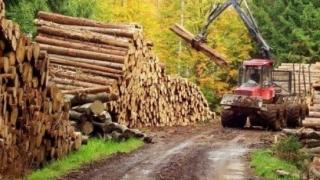 Percheziții la această oră la Holzindustrie! DIICOT, pe urmele lemnului românesc