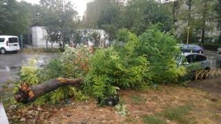 Arbori doborâți de vântul puternic, în municipiul Constanța
