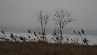 Lacul Tăbăcărie s-a transformat într-un patinoar pentru păsări