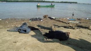 Doi imigranți, înecați în timp ce încercau să traverseze Dunărea spre România