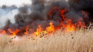 Incendiu de amploare între Istria și Vadu!