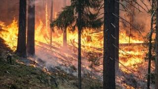 MAE: Atenţionare de călătorie în Grecia - risc incendii de vegetaţie