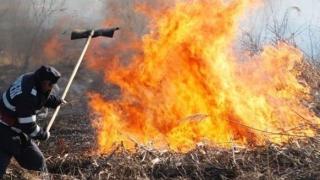 Incendiu puternic în Delta Dunării. Mai multe case, în pericol