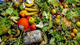 """Incredibil! Milioane de tone de legume și fructe ajung la gunoi pentru că """"nu arată bine""""!"""