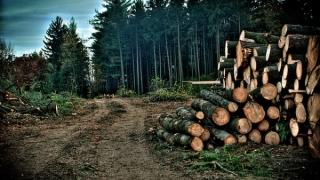 În România se va înființa DNA-ul Pădurilor