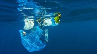 În vara asta, fii #ecoUsubacvatic! Scuba şi ecologizare într-un singur proiect