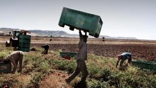 Italia: Raiduri împotriva sclaviei la ferme! Ce s-a întâmplat