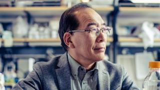 Japonezii încep fabricarea de organe umane în corpul animalelor