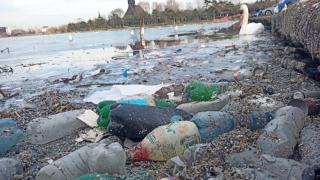 Lebedele înoată printre gunoaiele care plutesc pe Lacul Tăbăcărie din Constanța