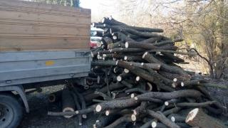 Prins cu lemne tăiate ilegal