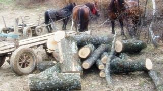 Hoții de lemne au dat iama în Ocolul Silvic Băneasa