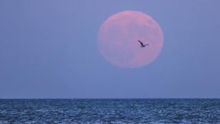 Super Luna albastră sângerie, fenomen astronomic rar în noaptea de miercuri