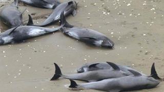 """Intervențiile rapide ale echipei ONG Mare Nostrum, susținute din Campania """"Adoptă un delfin"""""""
