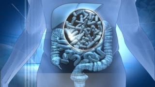 Microbii din intestine şi dialogul lor cu creierul: informaţii noi despre autism?