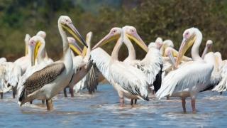 Ziua mondială a păsărilor migratoare, sărbătorită la nivel global
