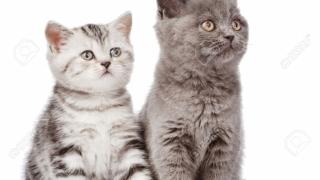 Povestea pisicilor-vedetă şi a pasionaţilor de feline