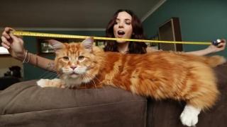Motanul Omar, cea mai lungă pisică din lume