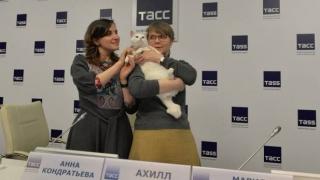 Motanul Ahile va face pronosticuri pentru CM din Rusia