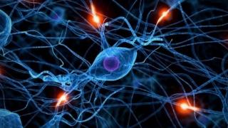 """5 moduri în care """"neuronii-oglindă"""" acționează în viața noastră"""